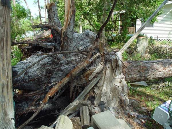 Root ball of tree that fell toward Left Front Corner of House